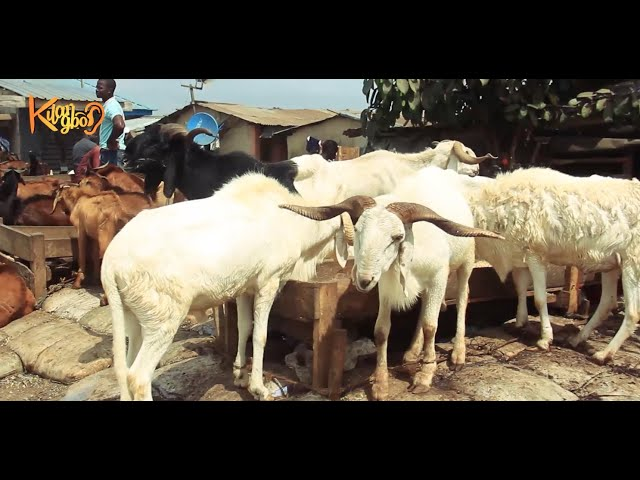 Sallah: Why Ram is sold from N120,000 upwards as  dealers lament low patronage at Kara Market