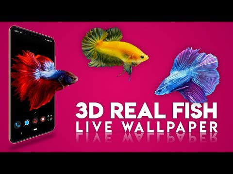 3D Real Fish Best Live Wallpaper | Any Android Phone | BETTA Fish