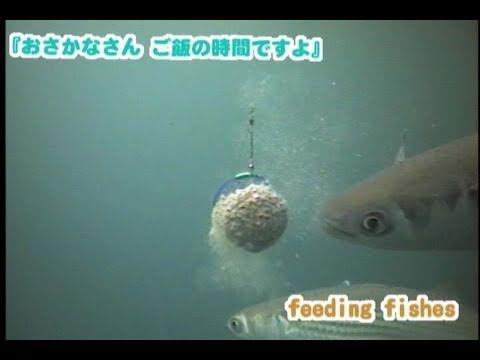 釣り場�見�魚��食シーン特集 怒涛�120個�水中カメラ映�】Feeding Fishes