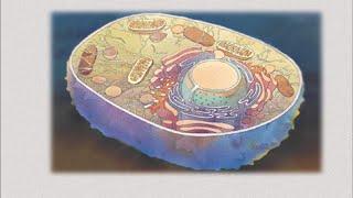 Строение клетки. Биология 5 класс.