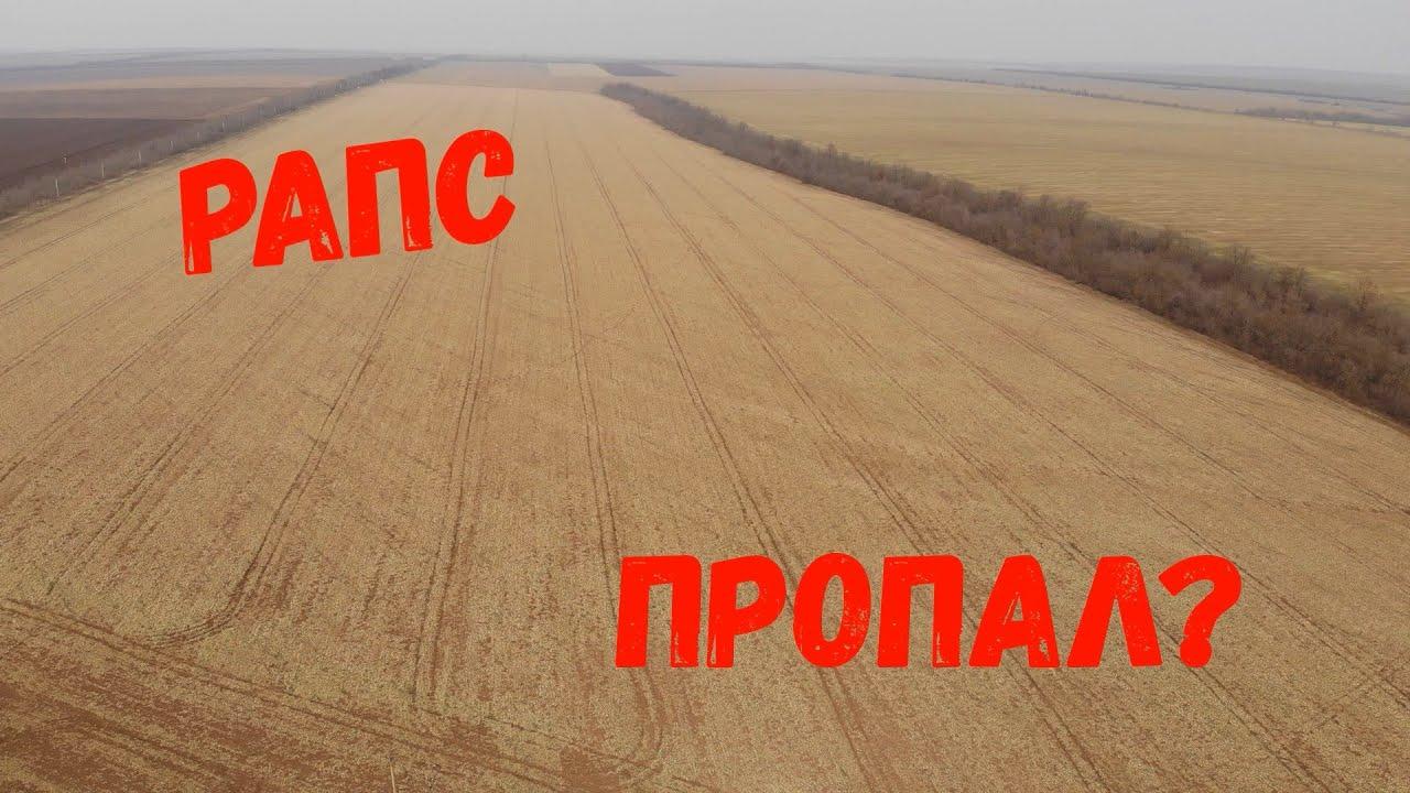 Посевы Озимых Зерновых в Ужастном состоянии!