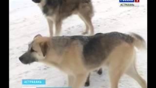 Почему в Астраханской области не хотят заниматься стерилизацией бездомных животных?