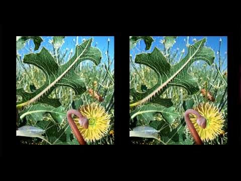 No 3D Glasses Required - Amazing 3D Stereoscopic Images