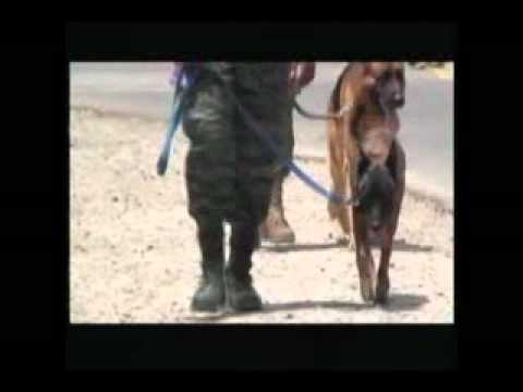 Belize Police dog squad gets new recruits