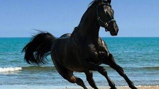 Сукко, конная прогулка, сентябрь 2014(Конная прогулка к озеру. Сукко, сентябрь 2014 года., 2015-05-24T18:49:41.000Z)