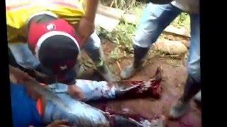 Violencia en Argelia Cauca Campesinos Asesinados y heridos