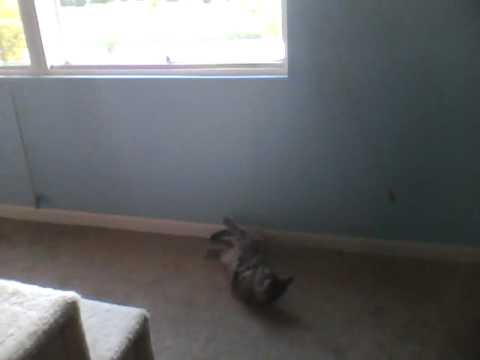 Peanut vs. the blinds- part 2