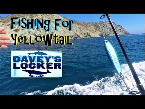 Fishing For YellowTail Outta Daveys Locker Newport Beach CA