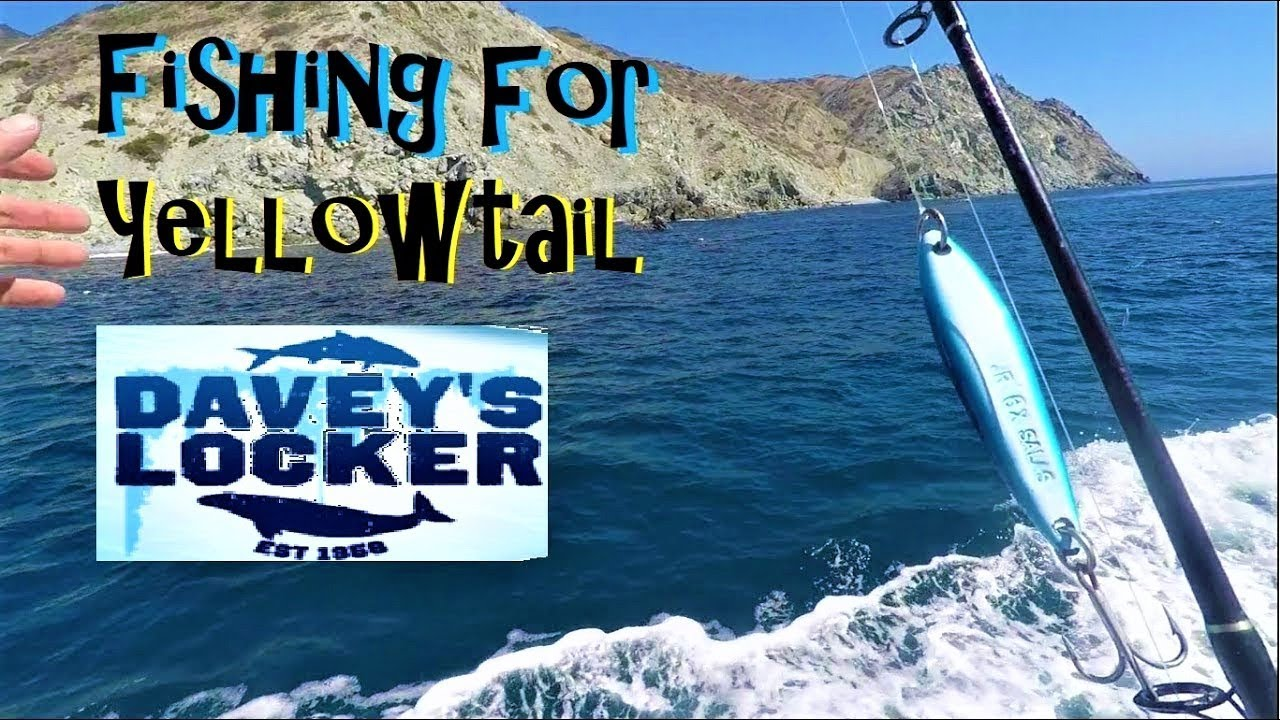 Fishing for yellowtail outta daveys locker newport beach for Davey s locker fishing report