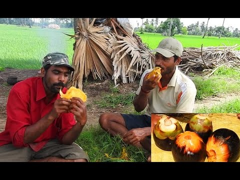 Toddy Palm Raw Fruit Eat - Palmyra Tree Fruits Eating - Nungu Fruits Natural food - Survival Videos