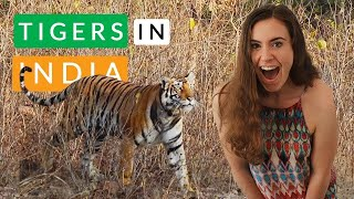 RARE sighting for INDIA | Tiger + Wild Dogs