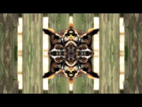 CUTTAXCHASE - EYES LIKE OWLS (Official NET Video)