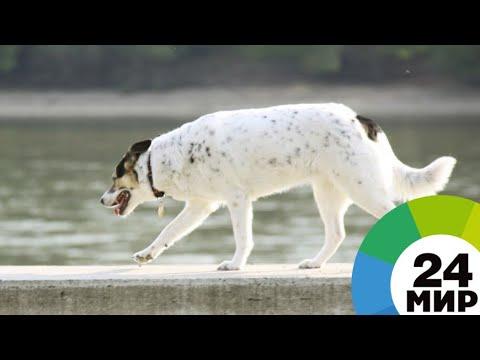 Как бездомный пес Тузик из ХМАО стал иммигрантом - МИР 24