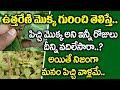 ఉత్తరేణి ఆకుల ఉపయోగాలు - Uttareni Leaf use For Good Health