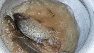 Hook Fishing - Traditional Hook Fishing   Best Fish Catching