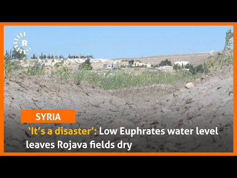 'It's a disaster': Low Euphrates water level leaves Rojava fields dry