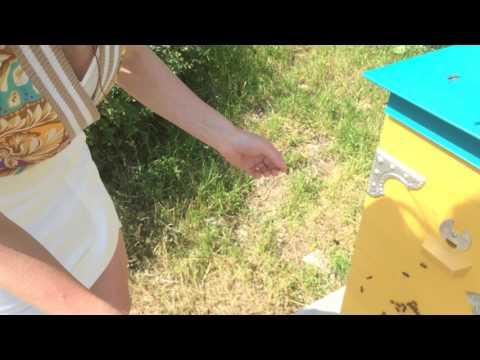 Значение сна: укус пчелы