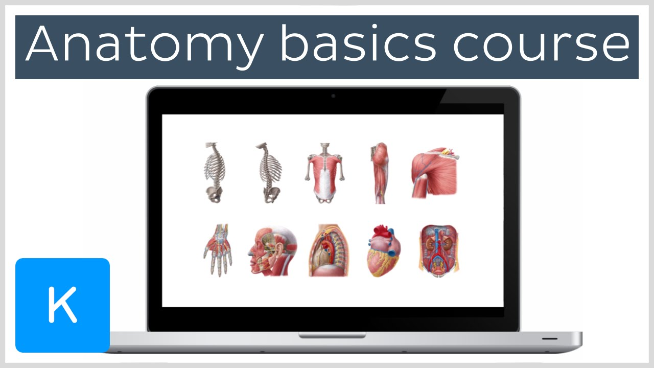 Human Anatomy Basics Free Udemy Course Kenhub Youtube
