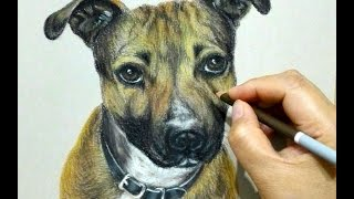 Dog Portrait Drawing in pastel - Speed Drawing - Staffordshire bull terrier