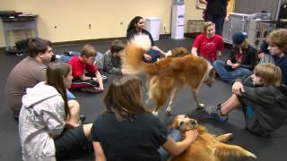 Austin Dog Alliance - Job Skills Training