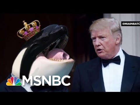 President Donald Trump Tweets About Prince Of Whales, In Greatest Misspelling Ever | All In | MSNBC