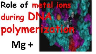 DNA polymerization by DNA polymerase 1