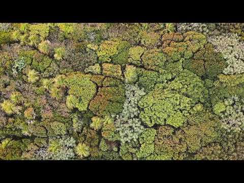 Wunderschön: ein fließendes Baumkronen-Meer (Video des Tages)