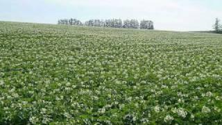 「ディア・グリーン・フィールド(Dear Green Field)」中村由利子 thumbnail