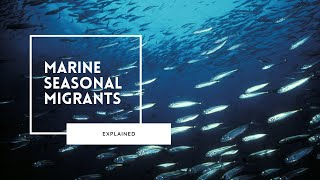 The Great Marine Migrations