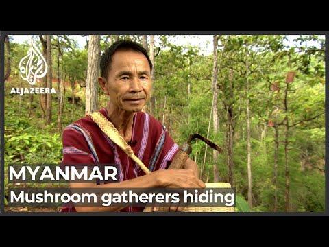Mushroom gatherers in Myanmar hide from military crackdown