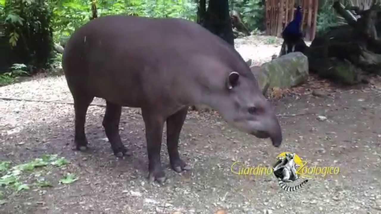 Sudamerica Al Giardino Zoologico Di Pistoia Youtube