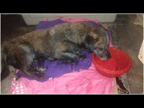 When Two Guys In Argentina Found A Stray Dog Covered In Tar, They Got Him The Help He So Needed