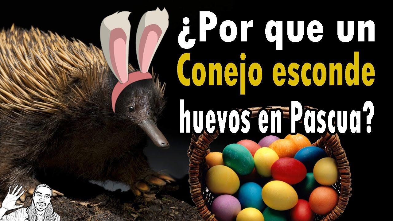 ¿Por qué un Conejo Esconde Huevos en Pascua? | #AbrilVideosMil | 15