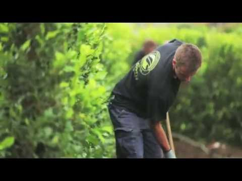 Build a Hedge - How to Plant a Hedge, Hedges in a hurry™ Instant Hedges by Twining Valley Nurseries