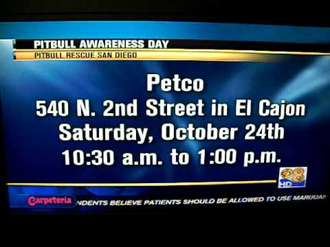 Pit Bull Rescue San Diego on CBS for National Pit Bull Awareness Day