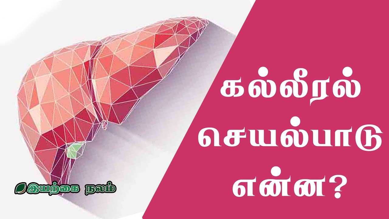 Liver in tamil meaning