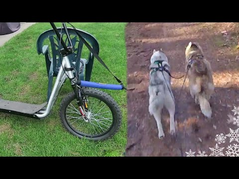 URBAN MUSHING | Dog Sledding with NO SNOW | Scootering Bikjoring with your dog