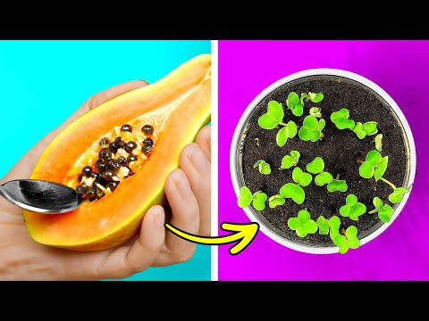 HOW TO GROW PLANTS    Useful Gardening Tricks You'll Be Grateful For