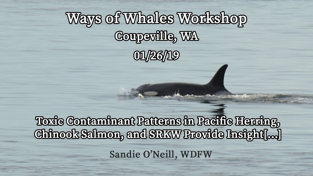 Ways of Whales Workshop #6 – Sandie O'Neill, WDFW