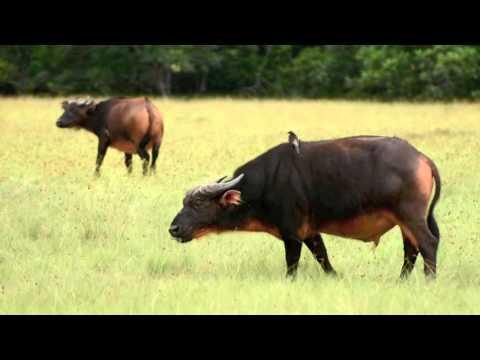 Loango National Park  - Roadtrip 2016