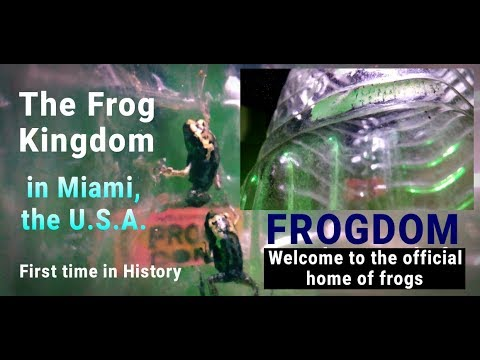 Frogdom | The Frog Kingdom In Miami, The U.S.A. | The Official Home Of Frogs | Fiction