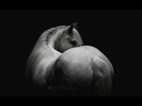 Countless [Equestrian Music Video]