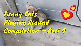 Funny Cats Playing Around Compilation — Part 4