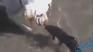 فيديو: سمكة تصادق كلب.. سبحان الله
