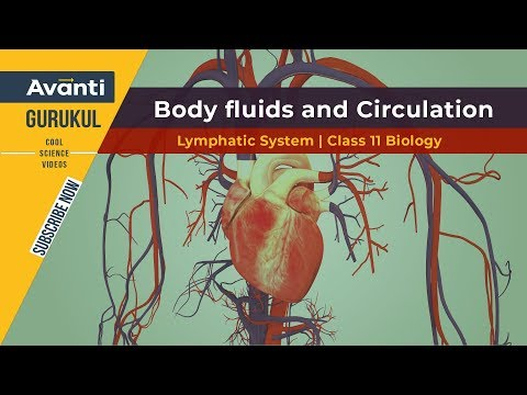 Lymphatic System | Body fluids and Circulation | Class 11 Biology | Urvashi Mam