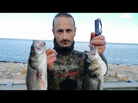 Ahmet Maden Zıpkınla Büyük Levrek Avı Spearfishing Seabass