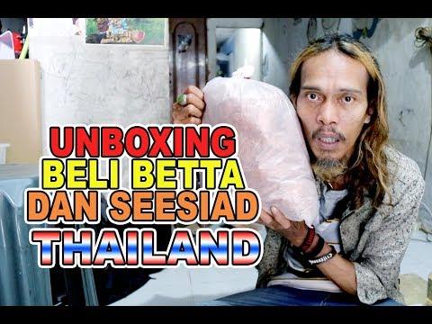 UNBOXING IKAN CUPANG DARI THAILAND