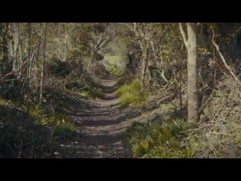 Bibio - Two Paths