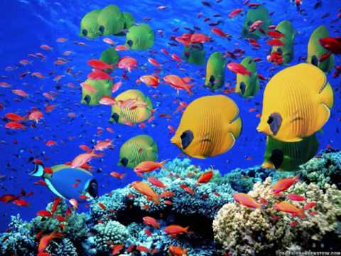 Fish under the deep blue sea youtube for Fish under the sea