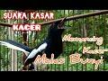 Suara Kasar Kacer Memancing Kacer Malas Bunyi  Mp3 - Mp4 Download